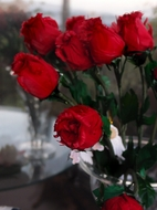 BLOWOUT One Dozen Red Feather Roses  (12 Pieces)