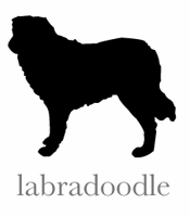 style labradoodle