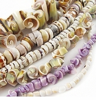 Unique Shell Beads