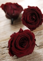 Preserved Wine Red Roses 2.5in  (Set of 6)