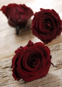 Preserved Wine Red Roses 2.5in  Pack of 6