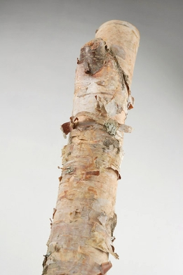 Birch Pole White 2ft