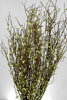 "20"" Natural Huckleberry Branches with Faux Green Berries 36 branches"