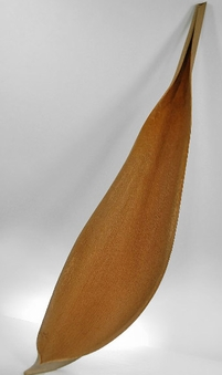 "38"" Natural Palm Paddles"