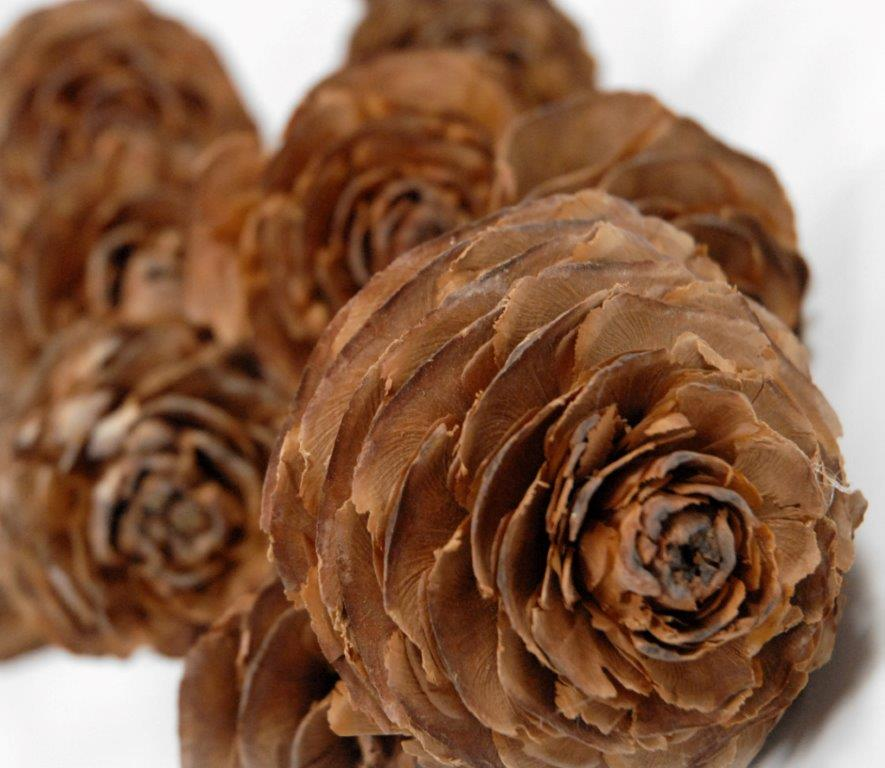 10 Cedar Wood Roses Floral Picks 16in