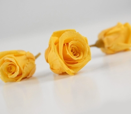 Preserved Roses 1in Golden Yellow 12pc