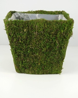Moss Covered Pots Square 8x8in