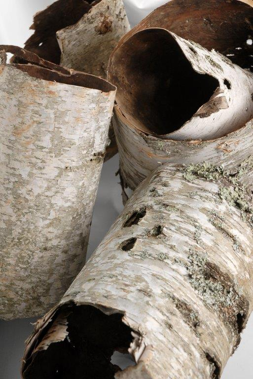 Natural Birch Bark Tubes 7-15 in. x 5-12 in. wide