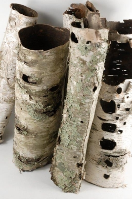 Natural Birch Bark Tubes 13-16in