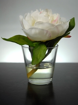 "5"" Cream Silk Peony in Glass Faux Water"