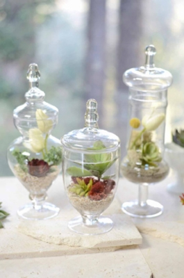 Apothecary Jars, Bell Jars, Cloches