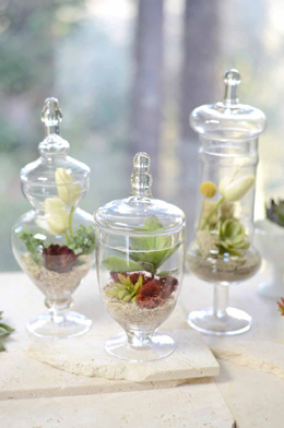Apothecary Jars Largest Selection Saveoncrafts