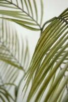 "Areca Palm Leaves 55"" Artificial"