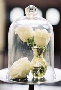 Bell Jars, Cloches - Click to enlarge