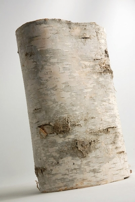 Birch Bark: cut to make napkin rings