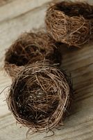 "Bird Nests 3"" Vine (9 nests)"