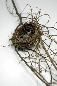 Birds Nest Branch 23""