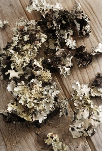 Black Lichen Moss Natural (2 ounces)