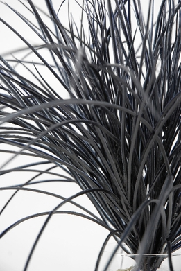 Black Outdoor Grass