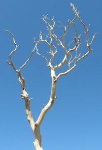 Branches, Natural