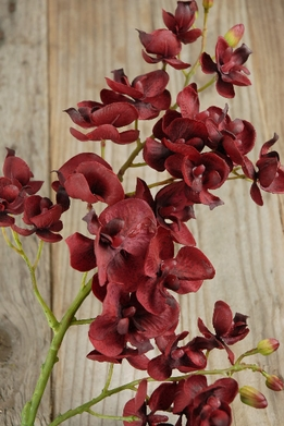 Burgundy Phalaenopsis Orchid Spray