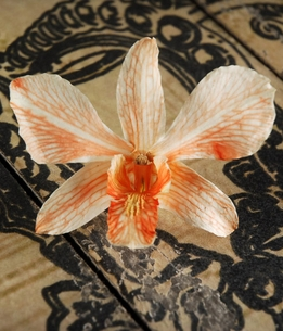 Butterfly Orange Preserved Orchid Flowers (30 flowers)