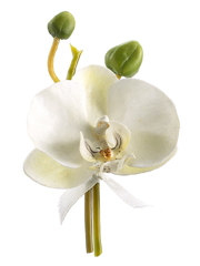 "Buttonholes Phalaenopsis Orchid with Pin 4"" White"