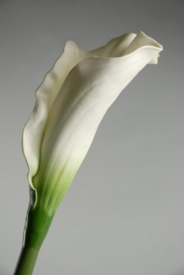 "Calla Lilies 32"" tall Cream White Natural Touch"