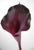 Artificial Calla Lily Purple