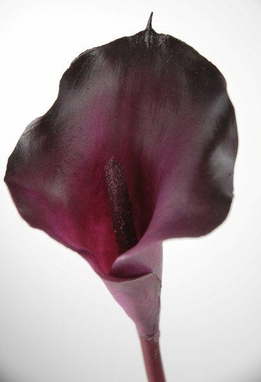 Calla Lilies Flowers Eggplant Purple Natural Touch