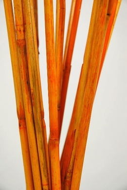 Cane Mango Orange 40 in. (20-25 pieces)