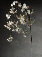 Cherry Blossom Branches White