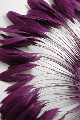 "Coque Feathers Purple Stripped Coque Feathers 6-8"" tall 12"" Strung Length"