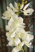 "Cream White Vandas 31"" Artificial Orchids"