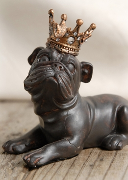 Crowned Bulldog