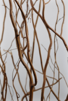 Natural Curly Willow Branches 3-5ft (12 Branches)