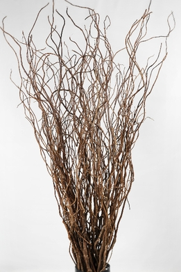 Curly Willow Branches 36in (Bundle of 10 branches)