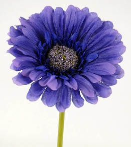 "Dark Purple Gerbera Daisies 9"" tall (24 flowers)"