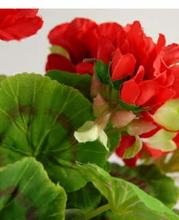 "Deluxe Geranium Plants Red 17"" tall"