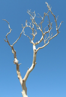 Display Branches & Trees