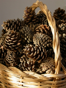 DIY Make a  Basket of Light  with Pinecones