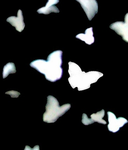 Butterfly Confetti Eco Friendly | Pack of 350