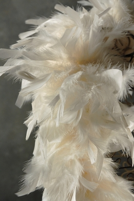 Feather Boas Cream Chandelle Feathers & Coque Feathers 80 gram