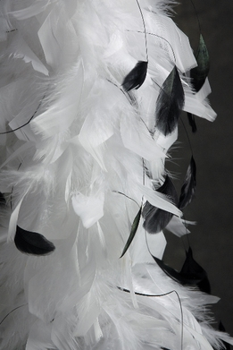 Feather Boas White Chandelle Boa with Black Coque Feathers