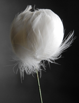 Feather Flowers on Wire Stem -- White