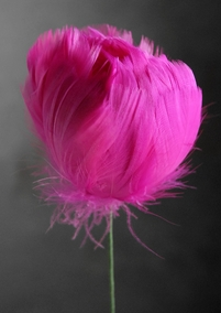 Feather Flowers on Wire Stem -- Hot Pink