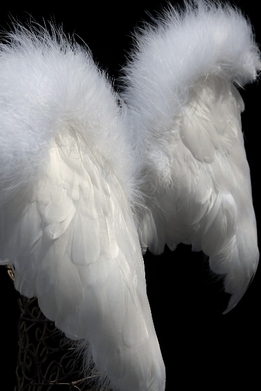 "Feather Wings 21"" x 15"" White Marabou Trim"