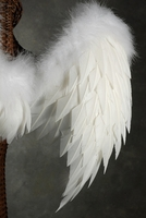 Feather Wings 33x22 Natural Feathers and White Marabou Trim