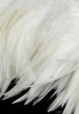 Feathers and Feather trims