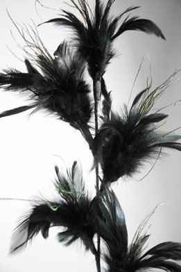 Black Feathers Wired